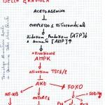 Le acetoagenine della Graviola come agenti antitumorali