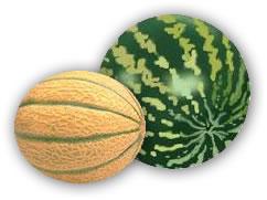 anguria-melone