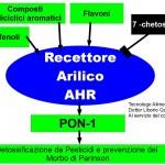 La PON-1, la proteina anti Parkinson