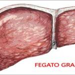 Il fegato: l'organo della detossificazione