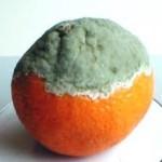 Le Muffe cancerogene sugli alimenti