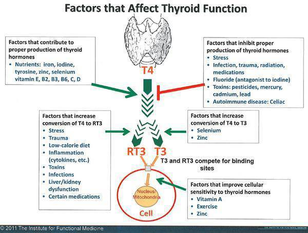 """an analysis of factors and symptoms of graves disease in thyroid diseases Thyroid diseases, including graves """"the symptoms a person gets likely relate to multiple factors that include common symptoms of autoimmune disease."""