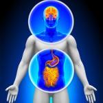 Batteri Intestinali e salute mentale