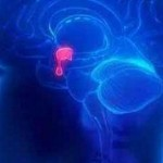 Melatonina: Come aumentare la sua sintesi
