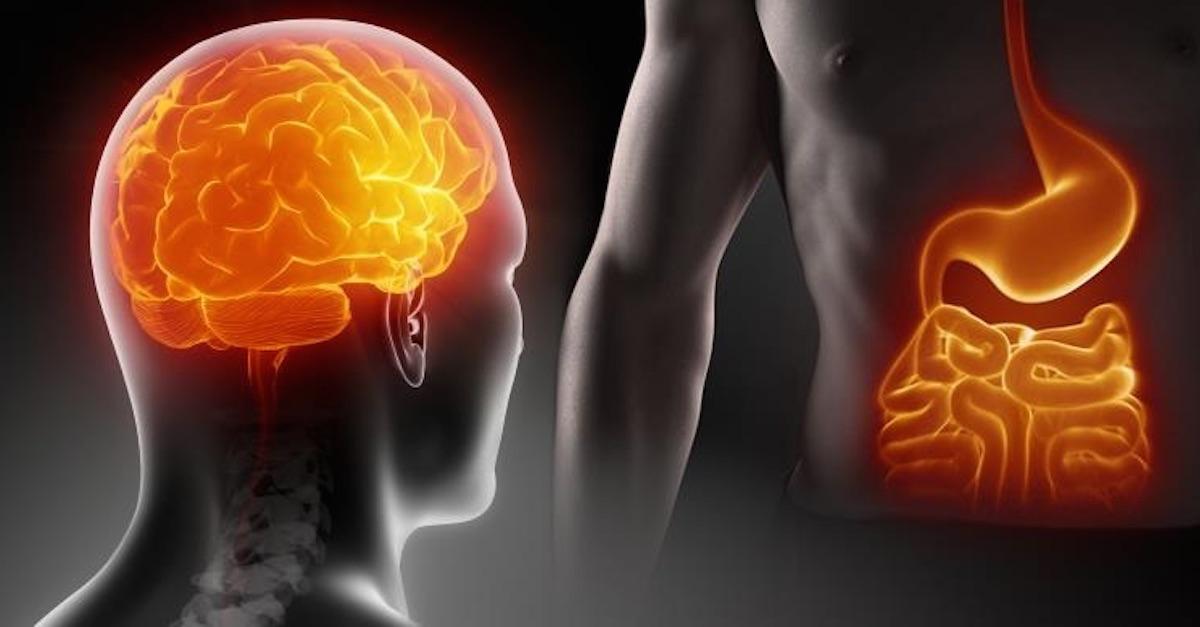 I microbi intestinali migliorano l'immunità e il cervello