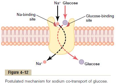 Troppo Sale e Zuccheri aiutano i Tumori a Crescere