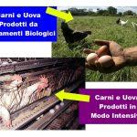 Carne prodotta da Allevamenti Intensivi e Biologici