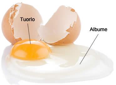 Come usare tuorli d'uovo avanzati - Idee Green