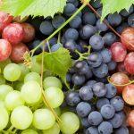 Impenna la Glicemia più un grappolo d'Uva o un Biscottino Secco?