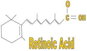 Una adeguata assunzione di vitamina A con gli alimenti permette di: 1. migliorare la salute della pelle e degli epiteli 2. Migliora l'idratazione degli occhi e delle mucose 3. Previene la cecità da carenza di vitamina A. 4. Mantiene la pelle morbida prevenendo la pelle rugosa 5. migliora la visione notturna 6. regola e permette il corretto funzionamento della vitamina D 7. Permette il corretto funzionamento degli ormoni tiroidei 8. Permette il corretto funzionamento degli ormoni sessuali maschili e femminili 9. favorisce la formazione dei globuli rossi 10. Rinforza il sistema immunitario e induce la loro differenziazione a specializzarsi 11. Contribuisce alla salute delle ossa e delle cartilagini 12. Funge da sostanza antinfettiva 13. Contribuisce a prevenire la genesi del cancro, tra l'altro alcune forme di tumore hanno giovamento dall'integrazione di alcuni isomeri della vitamina A 14. migliora la salute dei capelli e delle unghia Alla Vitamina A appartengono numerosi isomeri, i quali per svolgere attività regolatoria dei geni devono essere trasformati in acido Retinoico. Le varie forme di vitamina A assunti con gli alimenti per esercitare il loro ruolo fisiologico devono essere trasformati dal fegato in acido retinoico; La vitamina A alimentare e di riserva vengono trasformati dall'alcool deidrogenasi e successivamente da acetaldeide deidrogenasi in acido retinoico che è il metabolita attivo della vitamina A che incide sulla trascrizione dei vari geni nella cellula. Di acido retinoico si conoscono 2 isomeri: L'acido all-trans-retinoico e l'acido 9 – cis retinoico. In un regime di dieta normale circola nel sangue molto all-trans retinoico e poco 9-cis retinoico; Se l'assunzione di vitamina A tende ad aumentare, incrementa anche la presenza del secondo isomero. All trans retinoico è l'attivatore del recettore nucleare RAR, mentre l'isomero 9 – cis retinoico è attivatore deir ecettori RAR e RXR.