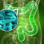 La flora batterica Intestinale mette in contatto l'ambiente con il sistema immunitario