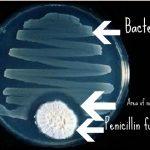 Il Lisozima l'antibiotico Naturale dei fluidi Corporei