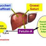 La Fetuina-A prodotta dal Fegato favorisce il Diabete