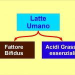 Il Latte Materno Contiene Il fattore Bifidus