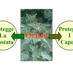 L'Ortica: L'erbaccia Che Fa Bene a Capelli e Prostata
