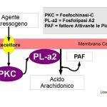 Che cosa è il PAF e quando viene prodotto?