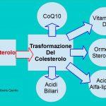 Trasforma il Colesterolo in Sostanze Utili