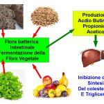 Le Fibre Riducono il Colesterolo