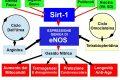 Come Produrre il gas trasmettitore della Longevità