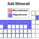 Minerali o Vitamine, chi tra i due è più importante?