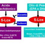 I Leucotrieni delle Allergie e del Dolore