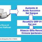 Zucchero e Ipertensione: il ruolo dell'Acido Succinico nel liberare la Renina.