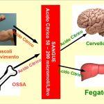 SLC13A5: Che ci Sta a Fare L'Acido Citrico Nel Sangue?