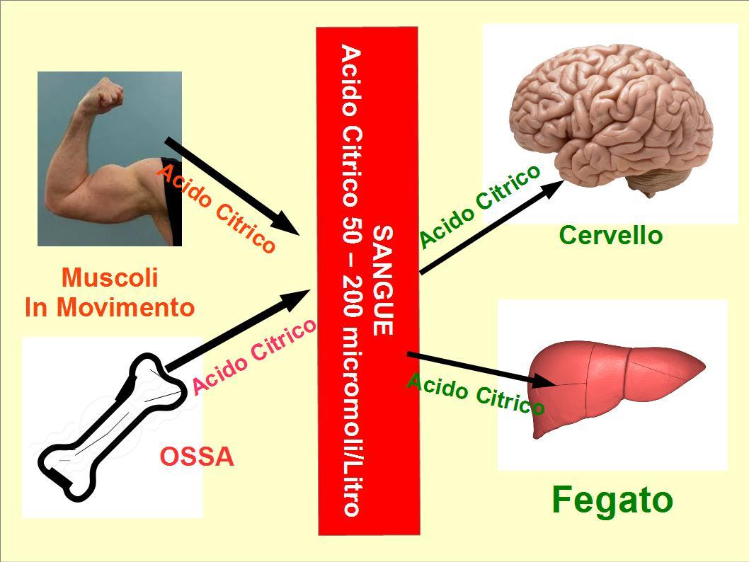 Acido Citrico Dosi Alimentari slc13a5: che ci sta a fare l'acido citrico nel sangue