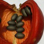Olio di Sterculia: Il Dimagrante delle Cavie