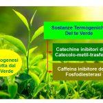 Te verde: Bevanda Termogenica Dimagrante