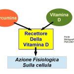 Curcumina è un attivatore naturale del recettore della vitamina D