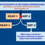 NRF2 e gli Antiossidanti di Seconda Generazione