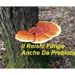 Il Reishi Funge anche da Prebiotico