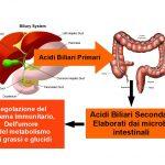 Acidi Biliari Secondari, Salute Mentale e Immunità