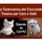 Il Cacao Tossico ai gatti e cani