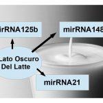 Il miRNA del Latte
