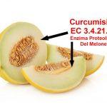 La Cucumisina del Melone
