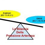 Ipertensione, Arginasi ed eNOS
