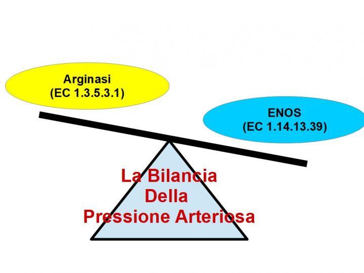 La Bilancia della pressione arteriosa