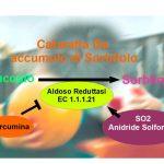 Iperglicemia, Sorbitolo & Cataratta