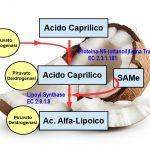Acido Caprilico dell'Olio di Cocco