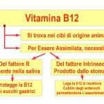 La Vitamina B12: Come si Assimila?