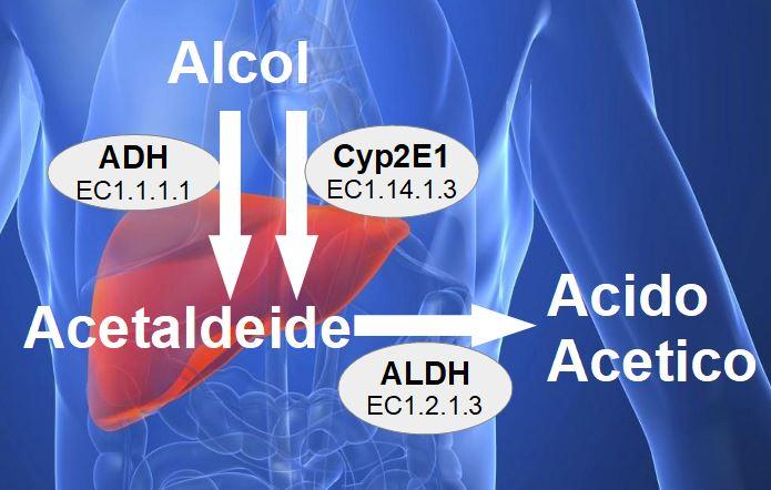 Gli Alcolici Avvelenano il Fegato