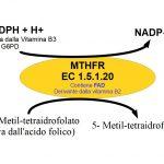 MTHFR e Omocisteina: cosa occorre per farlo funzionare bene?