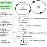 Favorire la Produzione di Glutatione