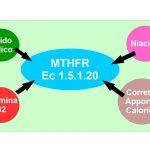Acido Folico, Riboflavina e Niacina aiutano MTHFR ad abbassare l'omocisteina