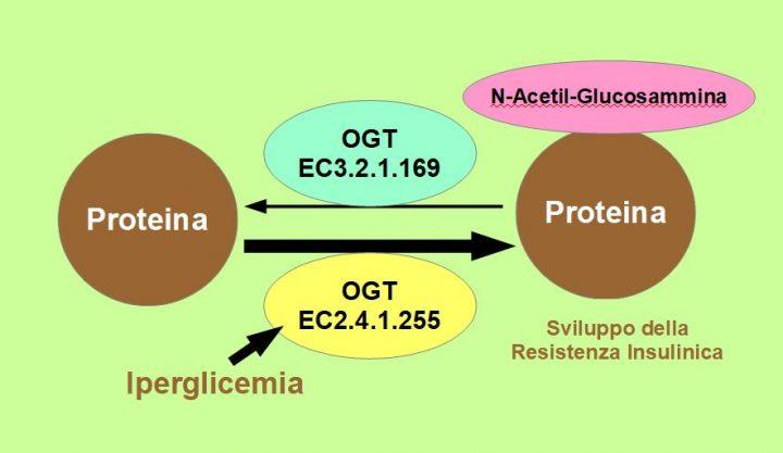 Resistenza Insulinica Progressiva