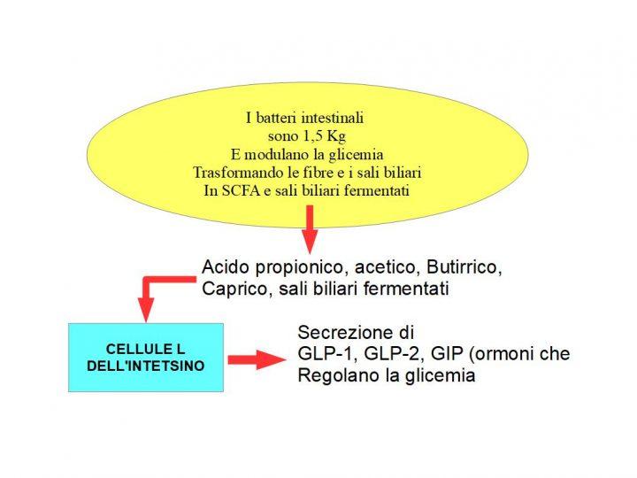 Batteri intestinali, si nutrono, fermentando la fibra vegetale e producendo acidi grassi SCFA (acido butirrico, propionico, caprico, caprilico), che legandosi ai recettori delle cellule-L, liberano ormoni ipoglicemizzanti come il GLP-1, GLP-2, GIP, Oxintomodulina.