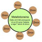 Espulsione di Metalli Pesanti