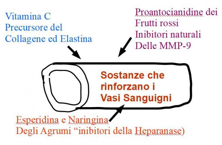 Nel la seguente immagine , vengono descritte le tre sostanze che rinforzano i vasi sanguigni: Vitamina C, Esperidina e Naringina degli agrumi, e Proantocianidine dei frutti rossi.